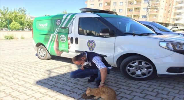 Osmaniye'de evde mahsur kalan sokak kedisi kurtarıldı