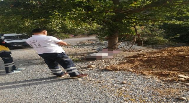 Adana'da ağaçtan düşen kişi hayatını kaybetti
