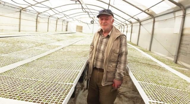 Balıkesirde üretilen şeker otu Amerikaya ihraç ediliyor