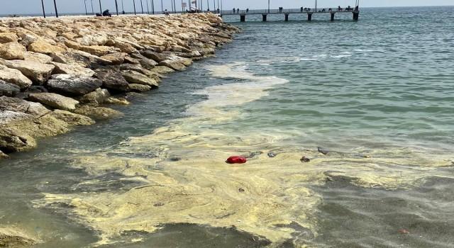 Deniz yüzeyi sarıya boyandı, Büyükşehir Belediyesi açıklama yaptı: 'Korkmayın