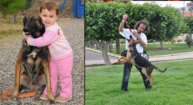 Köpeklerde ısırma neden olur? Eğitimle önüne geçilebilir mi?