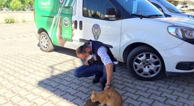 Apartman dairesinde mahsur kalan kediyi polis kurtardı