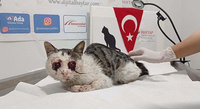 Caniler Tarafından Gözleri Oyulan Kedi Tedavi Altına Alındı