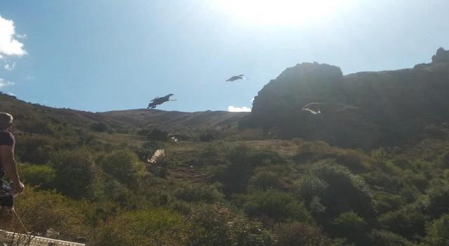 DKMP Genel Müdürlüğünce Karsa 400 kınalı keklik gönderildi