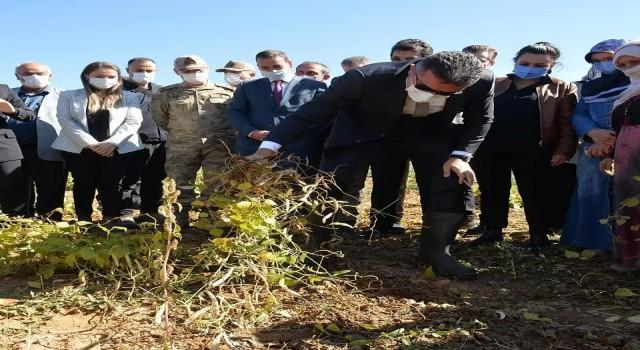 İspir Hanımeli Kadın Kooperatifi 100 dönüm araziye ektikleri fasulye  hasadını protokol ile yaptılar