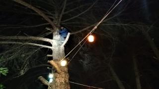 Burdur'da ağaca düşen yamaç paraşütçüsünü itfaiye kurtardı