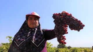 Burdur Gölü kenarında susuz yetişen Dimrit üzümünün pekmezi damakları tatlandırıyor