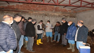 Diyarbakırda şap aşılama kampanyası başladı
