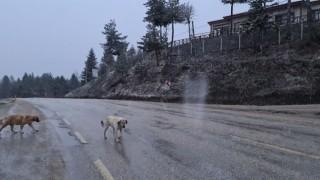 Karabükte Nisan ayında kar sürprizi