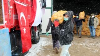 TMO, Nevşehirde patates alımlarına başladı