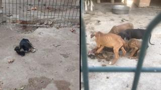 Barınaktaki hayvanlar, açlıktan yavrularını yedi