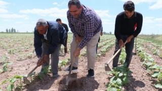 Aksarayda tarımsal üretim hız kesmeden devam ediyor
