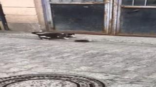 Artvinden fare ile kedinin güldüren görüntüsü