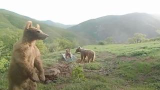 """Bakan Pakdemirliden su yalağında oynayan ayılarla ilgili Halinden memnun"""" paylaşımı"""