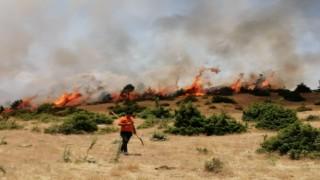 Bingölde orman yangını büyümeden söndürüldü