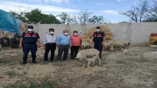 Eskişehirde çalınan 23 küçükbaş hayvan Afyonkarahisarda bulundu