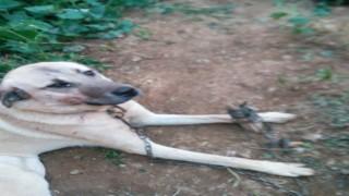Ispartada köpeğe tuğla ile saldırdılar