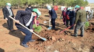 Kilis'e 17 yılda 10 milyondan fazla ağaç dikildi