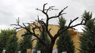 Kırşehirde Şehitler Ağacı açıldı