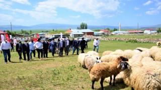 Köyümde Yaşamak İçin Bir Sürü Nedenim Var projesi kapsamında üreticilere koyun dağıtıldı