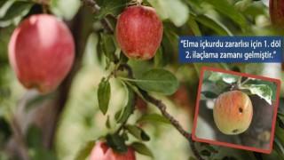 Vanda elma iç kurduna karşı ikinci ilaçlama uyarısı