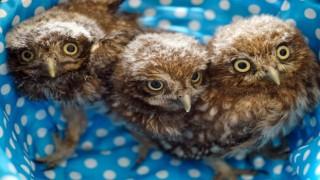 Yavru yaban hayvanları Çanakkalede emin ellerde