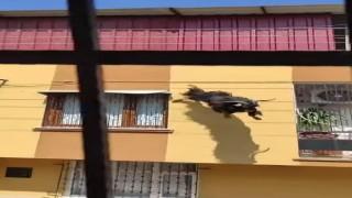 Adanada kurbanlık keçi çatıdan düştü