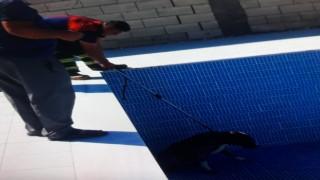 Havuza düşen köpeği itfaiye ekipleri kurtardı