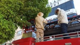 Kent merkezindeki ağaca oğul veren arılara itfaiye müdahale etti