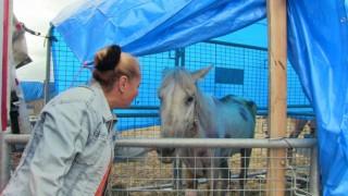 Artvinde bir tırın dorsesinde ölüme terk edilen atların sahibine 35 bin lira para cezası kesildi