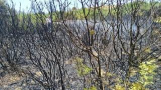 Bigada orman yangını