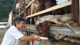Hasta atlarla sınırı geçemeyeceğini anlayınca Hopadaki tır parkında atları kaderine terk etmiş