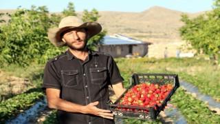 Köyüne dönerek organik çilek yetiştirmeye başladı, şimdi taleplere yetişemiyor