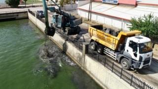 Balık ölümlerinin artmaya başladığı Akarçayda temizlik çalışması başlatıldı