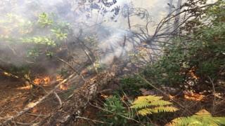 Balıkesirde yıldırımın düştüğü ormanlık alanda yangın