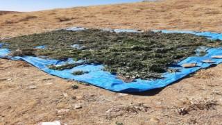 Bingölde kurutulmaya bırakılmış vaziyette 78 kilo kubar esrar ele geçirildi