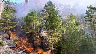 Burdurdaki orman yangını büyümeden söndürüldü