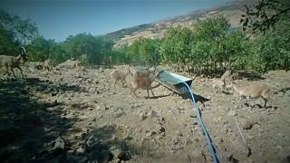 Elazığda yaban hayatı fotokapanla görüntülendi