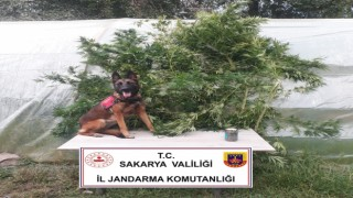Jandarmadan uyuşturucu operasyonu: 1 gözaltı