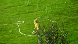 Kampüs alanına inen tilki bahçeyi suladı!