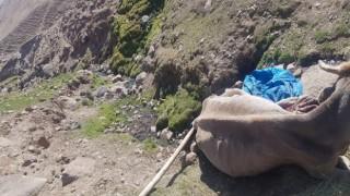 Uçurumdan düşen ineği Aras Edaş ekipleri kurtardı