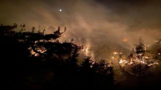 Uşakta çıkan yangında 2.5 hektar alan kül oldu