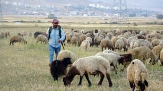 Yüksekovada etkisini sürdüren kuraklık çobanları da vurdu