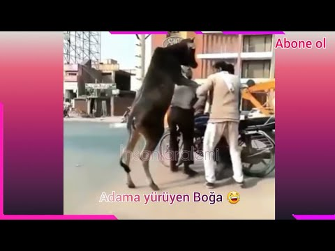 Komik Video Maymunlar Hayvanlar Alemi